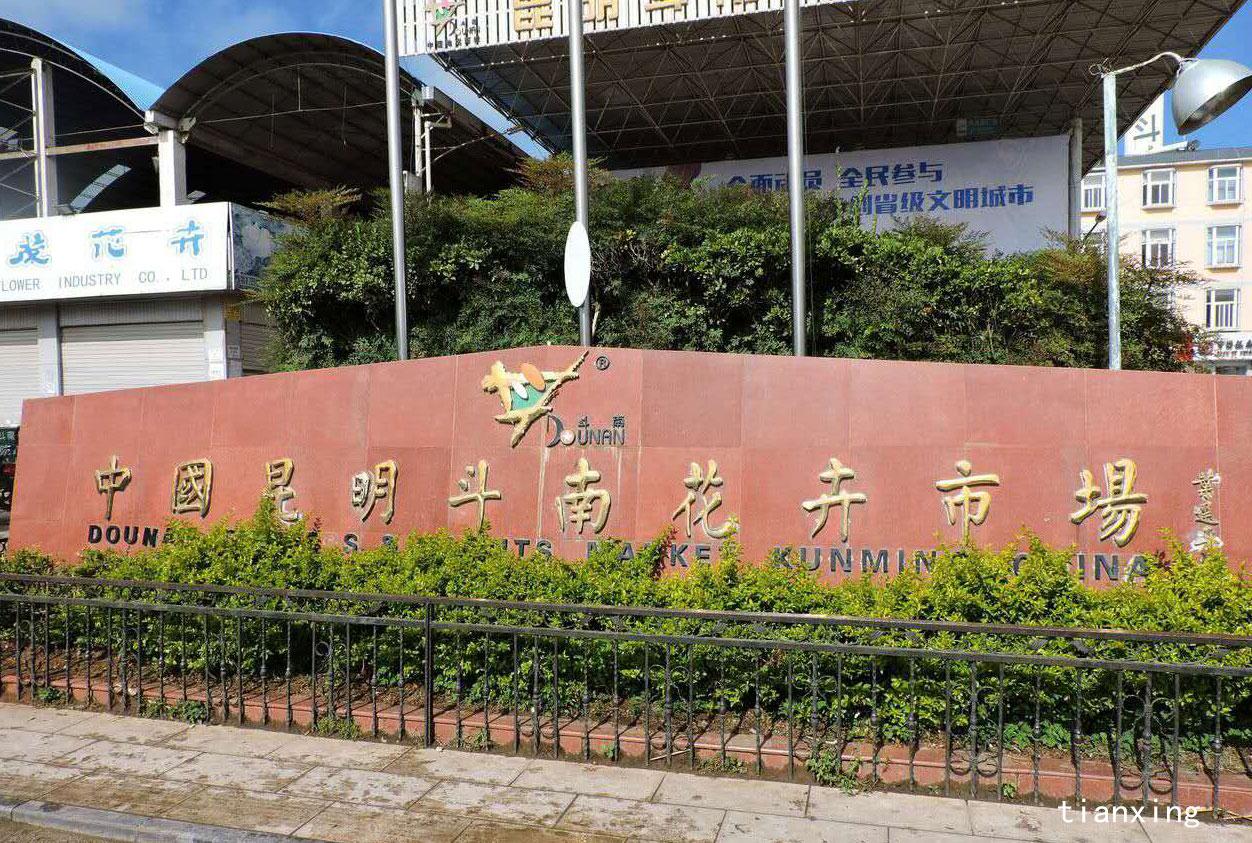 188bet官网手机版下载斗南花卉市场